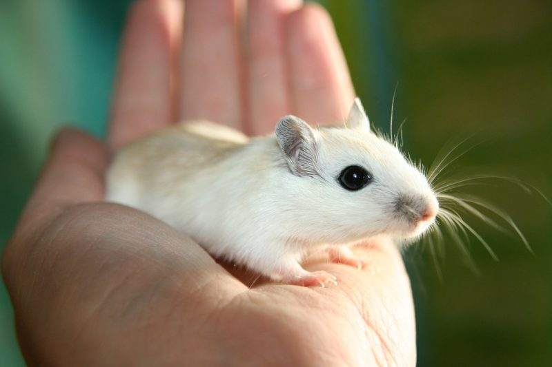 Top 5 Methods to Get Rid of Mice Fast and Keep Them Away